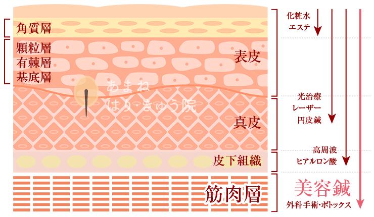 美容鍼灸施術の効果の図